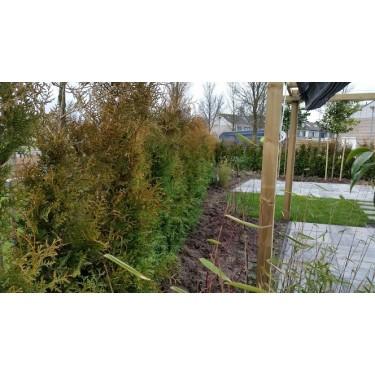 Aanplantservice Coniferen